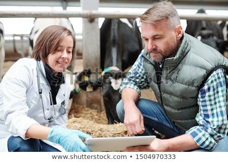 Foto stock: Jovem · veterinário · trabalhador · laticínio · fazenda · olhando