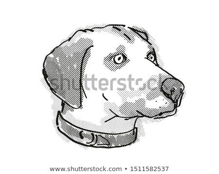 Zwarte mond hondenras cartoon retro tekening Stockfoto © patrimonio