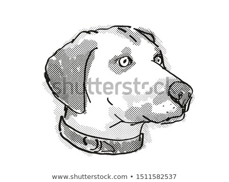 Black Mouth Cur Dog Breed Cartoon Retro Drawing Stock photo © patrimonio