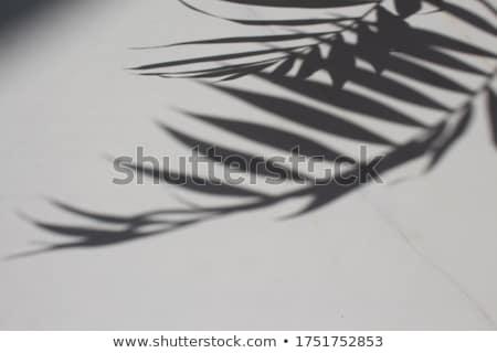 abstrato · arte · botânico · sombras · preto · marca - foto stock © anneleven