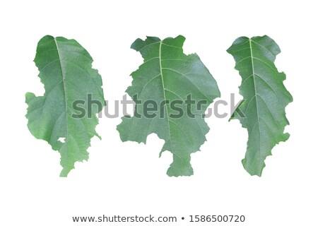 Stok fotoğraf: Worm On A Leaf