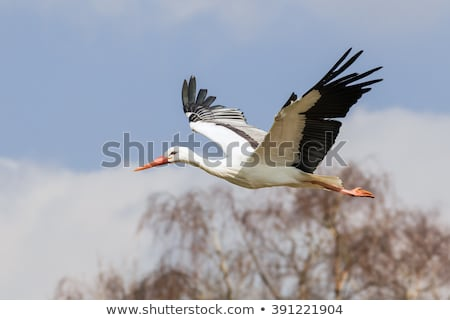 аистов женщины иллюстрация сердце птица розовый Сток-фото © adrenalina