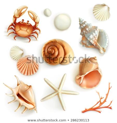 Kagyló szett kagylók terv óceán piros Stock fotó © OliaNikolina