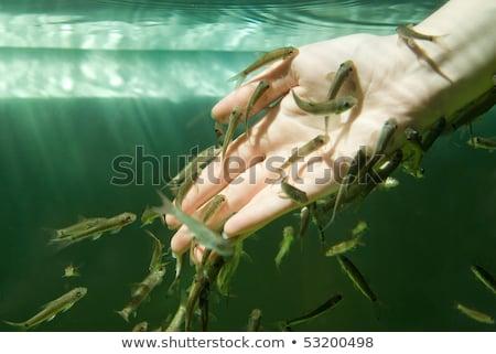 педикюр · иллюстрация · женщину · рыбы · массаж · девочек - Сток-фото © maridav