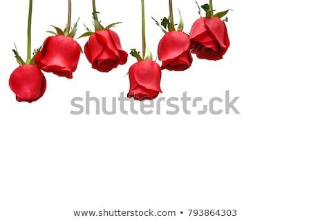 Fleur rose comme coeur art vecteur Photo stock © Hermione