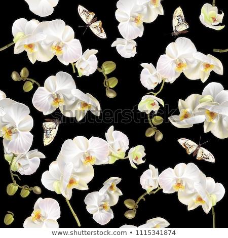 exótico · colorido · borboletas · quatro · isolado · branco - foto stock © njaj