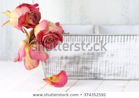 Stock photo: Dry Pink Roses On Old Wooden Background