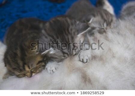 Adorable small kitten and breakfast Stock photo © joannawnuk
