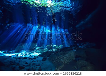 Sunlight in a Cenote