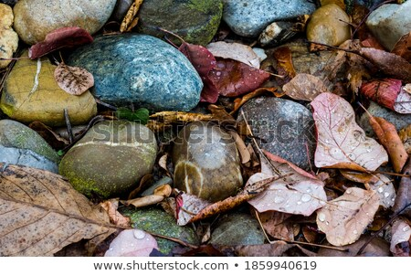 葉 ぼやけた ツリー オレンジ 赤 秋 ストックフォト © eltoro69