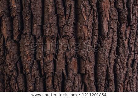 Havlama detay doku görmek ağaç arka plan Stok fotoğraf © raywoo