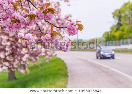 Bahar geçit ağaç yeşil bitki yol Stok fotoğraf © phbcz