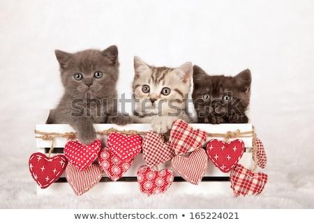 Valentine kedi ahşap kalp lies Stok fotoğraf © samsem