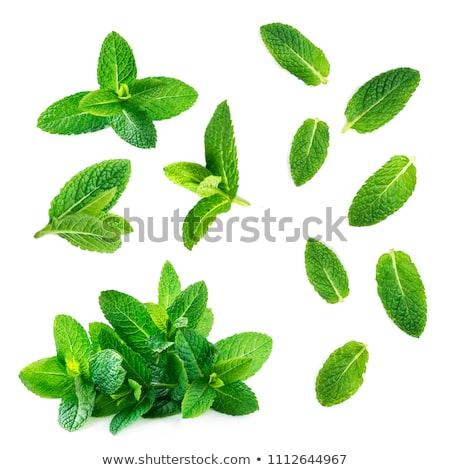 Menta foglie isolato bianco alimentare foglia Foto d'archivio © danny_smythe