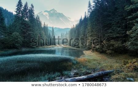 утра озеро девушки пейзаж лет Сток-фото © MojoJojoFoto
