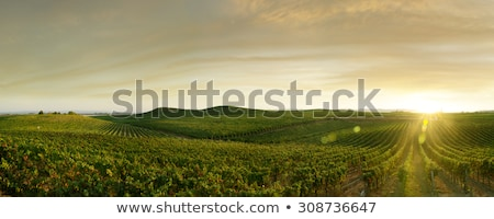 виноградник пейзаж время испанский Солнечный Сток-фото © ABBPhoto