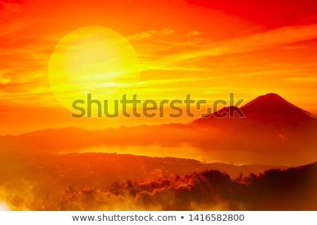 ライオン 王 日没 ツリー 太陽 ストックフォト © bradleyvdw