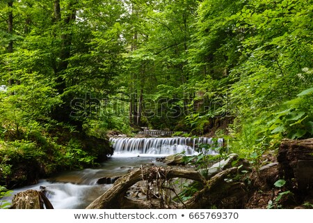 çağlayan kanyon nehir orman doğa kaya Stok fotoğraf © rhamm