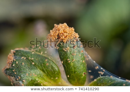 örümcek tüm ürpertici dışarı bitki hayvan Stok fotoğraf © jorgenmac