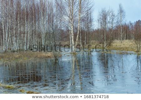 Flooding with trees in water Stock photo © ivonnewierink