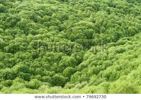 Floresta acima decídua verão Alemanha primavera Foto stock © Arrxxx