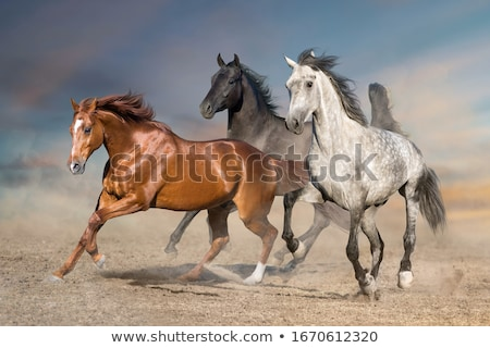 group of horses stock photo © maros_b