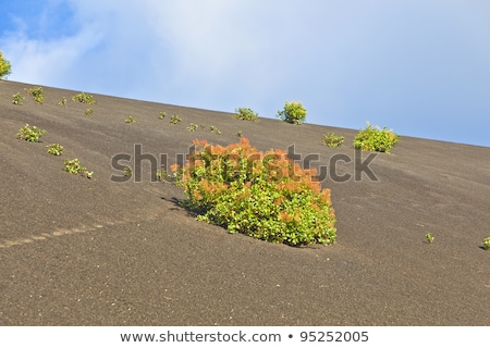 sparse vegetation on volcanic hills in Timanfaya National Park Stock photo © meinzahn