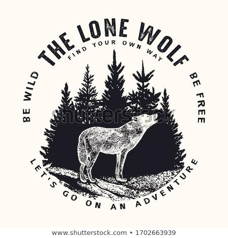 Wild wolf Stock photo © anbuch
