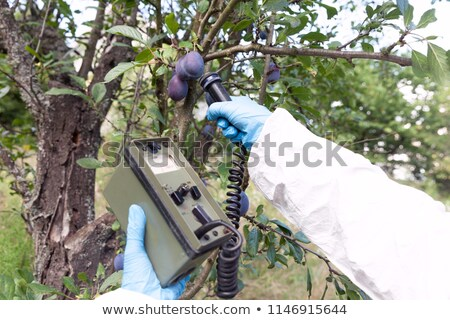 Foto stock: Measuring Radiation Levels Of Fruits
