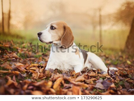 Kopó kutyakölyök kutya zöld fű fű boldog Stock fotó © feelphotoart