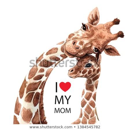 Suluboya Görüntü Zürafa Dijital Boyama Kafa Stok