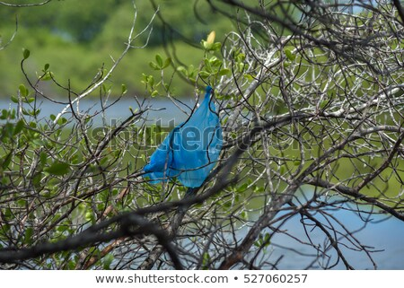 environmental pollution - plastic shopping bag on a tree Stock photo © PixelsAway