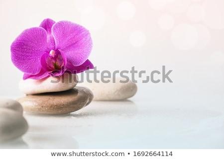 Zen orchidea kecses fehér távolkeleti virág Stock fotó © allihays