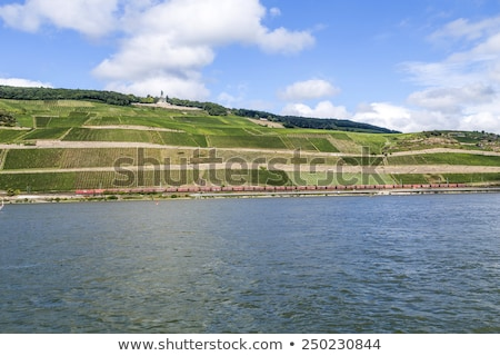 beautiful vineyards at  the rhine valley in Ruedesheim with trai Stock photo © meinzahn