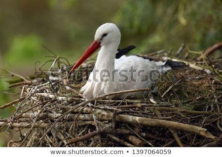 Beyaz leylek yuva mavi gökyüzü aile doğa Stok fotoğraf © master1305