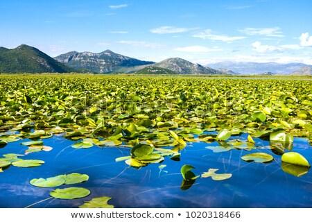 озеро Черногория летнее время год воды лес Сток-фото © avq