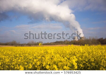 wildflowers bloom under nuclear power plant exhaust plume stock photo © cboswell