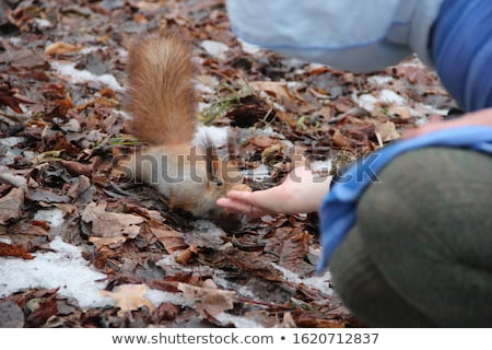 Young woman in the image of red squirrel with walnuts  Stock photo © master1305