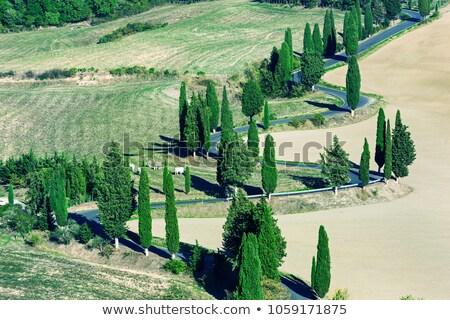 Toskania · zachód · słońca · drogowego · drzew · domu - zdjęcia stock © photocreo