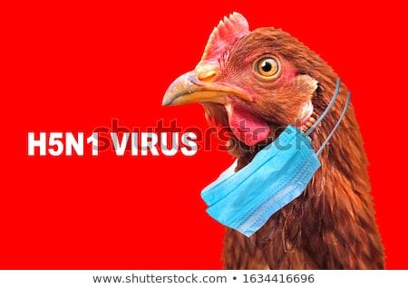 Streszczenie ptaków maska odizolowany obraz Zdjęcia stock © rufous