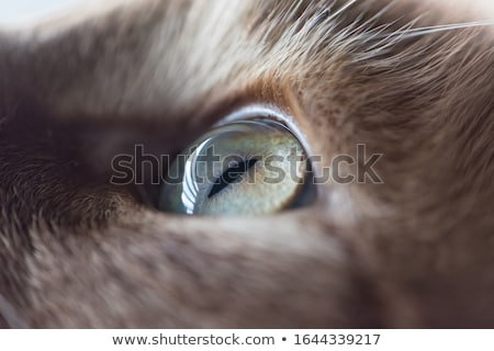 The left eye of a cat - macro Stock photo © IMaster