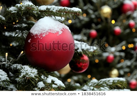 Christmas red balls with snow covered fir branches Stock photo © -Baks-
