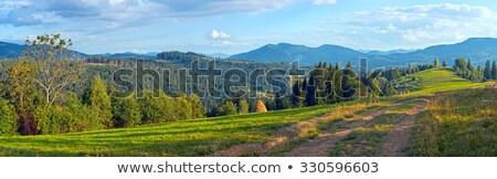 緑 · 林間の空き地 · 森林 · 雨 · ツリー · 葉 - ストックフォト © wildman