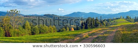 Avond groene berg glade bos Stockfoto © wildman
