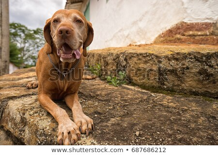 Kutya Colombia 22 turista áll gyarmati Stock fotó © Quasarphoto