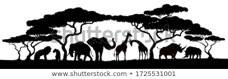 Silhouette africaine Safari animaux Photo stock © Krisdog