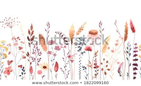 Rózsaszín vadvirágok gyönyörű forró távoli Ausztrália Stock fotó © THP