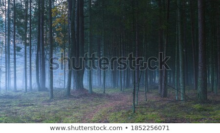 forrest at night scene Stock photo © bluering