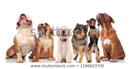 six panting dogs looking up while standing and sitting stock photo © feedough