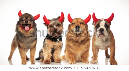 Equipo cuatro pequeño diablo perros Foto stock © feedough